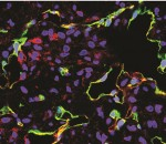 Dr. Rabbany's Picture of Cells
