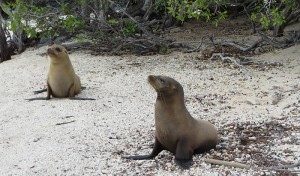 sea lions resized