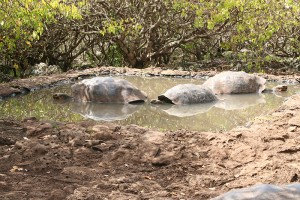 tortoises resized